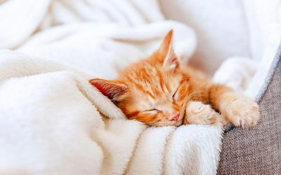 What Essential Oils are Safe For Cats?